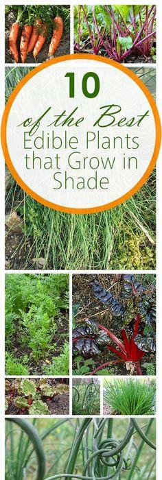 Edible Plants, Gardening Hacks, Gardening Tips, Easy Gardening Ideas,  Popular Pin,