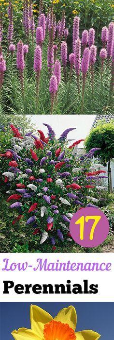 17 Low Maintenance Perennials