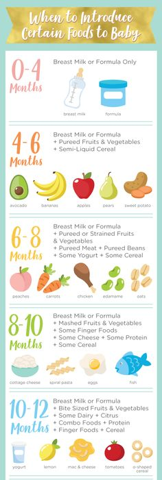 Infographic For Baby Food Pieces