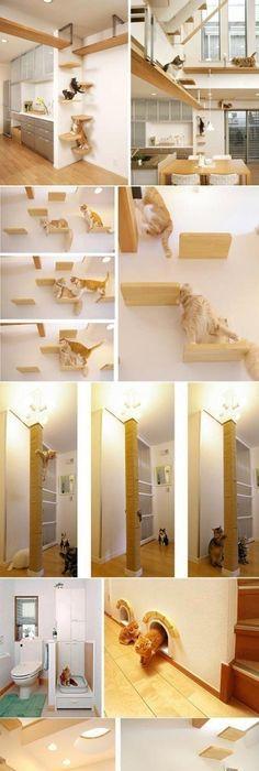 Cat House A S Wildest Dreams Come True Vous Pouvez Faire