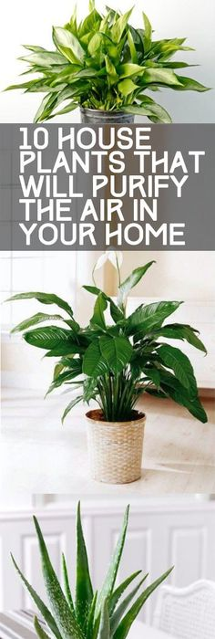 11 Easy To Grow Houseplants Houseplants Palm and Iron