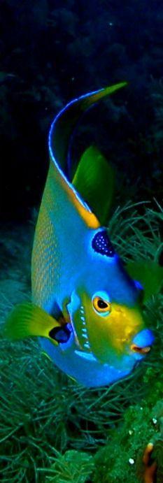 Girls Sequin Angelfish Tee