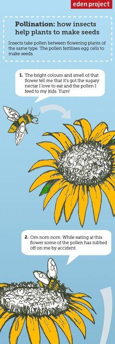 Eden Project Pollination Diagram Diy Enthusiasts Wiring Diagrams