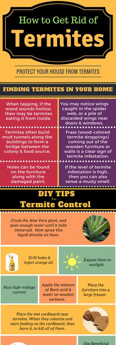 How To Get Rid Of Termites: A Complete Guide With Infographic (Camping  Hacks Bugs)