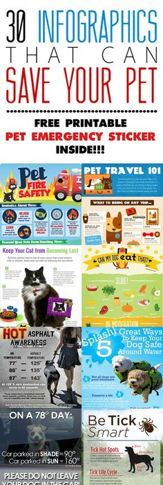 30 Infographics that can Save Your Pet     Pet Safety Tips + Free - fresh cat birth certificate free printable