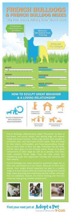 Mastiff growth chart English Mastiff Pinterest
