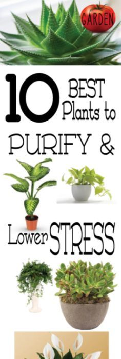 10 Best Plants To Purify And Lower Stress
