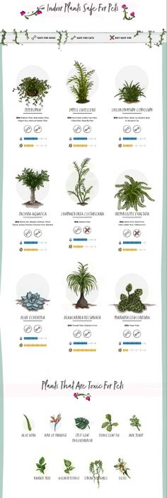 Pet-friendly plants and Toxic plants to pets | Pet pet, Plants and ...