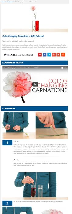 Painted Daisies :: Simple Science Experiments for Kids   Science ...