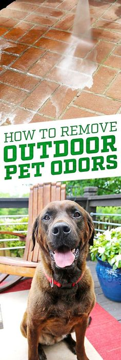 How To Remove Outdoor Pet Odor