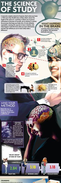 What Happens to Your Brain When You Learn a New Skill? - CCSU