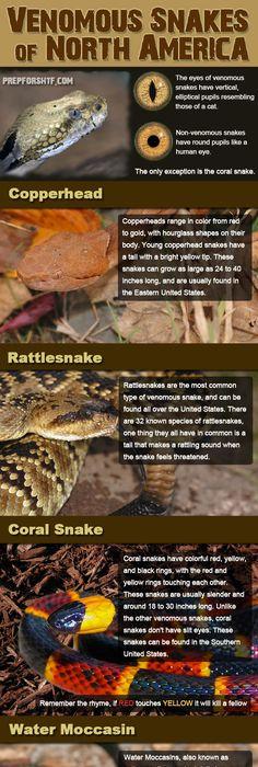 Venomous snakes of the united states infographic preparing for shtf