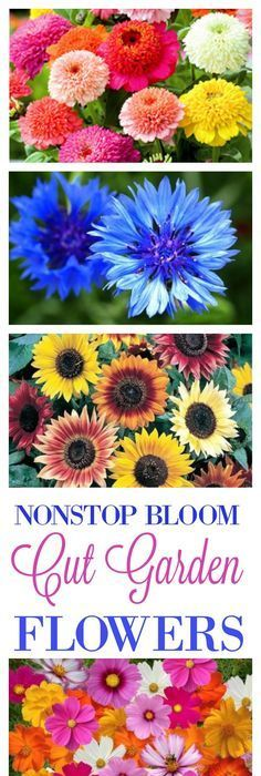 Continuous Blooms For A Cut Flower Garden