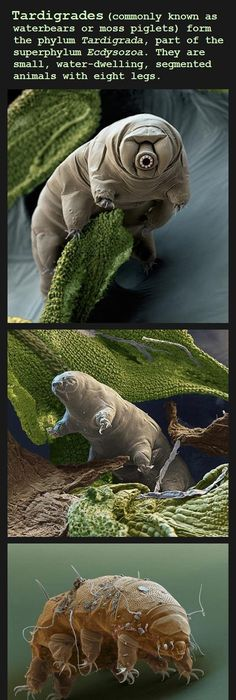 I thought this would be the perfect place to demonstrate how to look for  tardigrades.