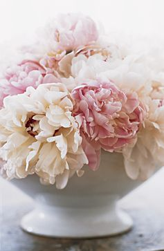 Romantic bouquet of cream and pink peonies in a simple white bowl