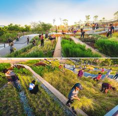 A rooftop farm with a terraced landscape design inspired by rice fields.