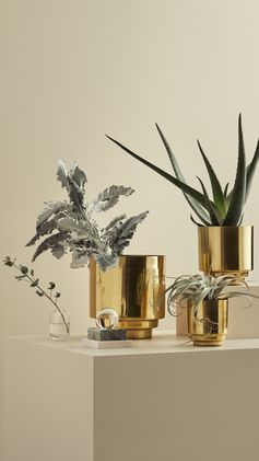 H&M HOME | Master the green and gold interior trend with metallic gold pots and lush green plants.