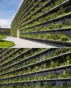 Rows of plants cover the exterior of a factory.
