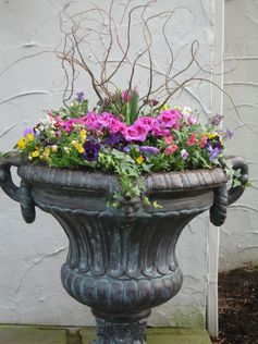 Spring Planter ~ Viola's, Geranium, Tulips & Curly Willow