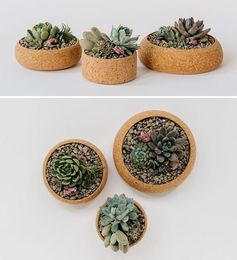 A trio of round succulent pots made from cork.