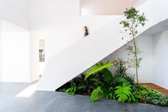 An Indoor Garden Makes Use Of The Space Under These Stairs