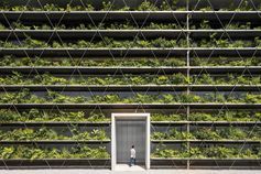 Rows of plants cover the facade of a factory in Vietnam, filtering out the rain and sun, and helping improve the quality of the air and the temperatures within the factory.