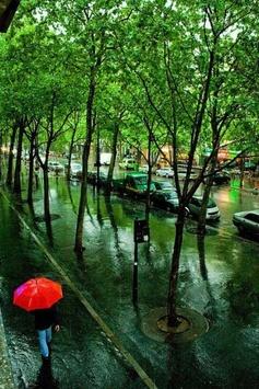 濃い緑が鮮やかな5月のパリの雨