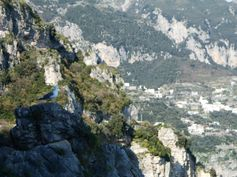 Seagull above Positano