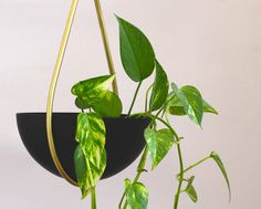 A modern hanging planter with a teardrop shape and a finish of brass and matte black