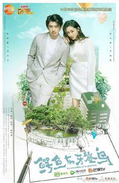 Cá Sấu Và Chim Choi Choi