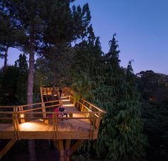 A treetop canopy walk in Portugal has lighting for nighttime strolls.