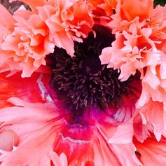 And they called it poppy love x Stella