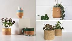 Modern cork tabletop and hanging planters for cacti and succulents.