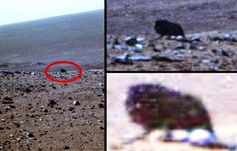 Possible Créature foncé à quatre pattes Caught On Camera par Opportunity Mars Rover