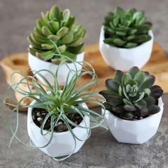 A set of four white small geometric succulent pots.