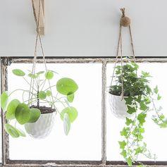 cache pot à suspendre - fleurs et plantes  suspendues