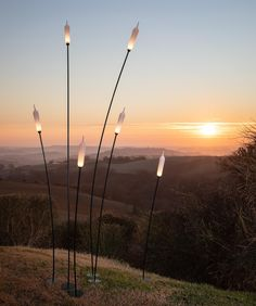 Modern outdoor lighting that can be grouped together to create a similar shape to that of Cattail plants.