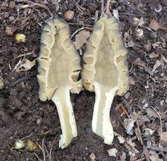 I am going to make this as easy as I can for you. The fungal kingdom is complex… mushroom hunting doesn't have to be. You've landed on this page for a reason. You want to find s…