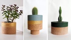 Modern tabletop cork planter with colorful accent for cacti and succulents.