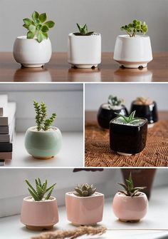 Modern ceramic succulent pots in white, mint green, black, and soft pink.
