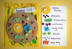 love this cell model...lots of other fun science projects, too. Katherine Marie