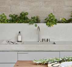 A modern concrete kitchen countertop with matching backsplash and a row of plants.