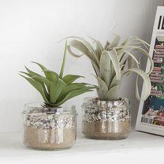 succulente en pot
