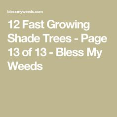 12 Fast Growing Shade Trees - Page 13 of 13 - Bless My Weeds