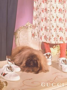 A closer look at the Gucci Ace sneakers with detachable patches featuring dog images, part of the Gucci Chinese New Year capsule to celebrate the Year of the Dog. The motifs are inspired by a pillow given as a gift to Alessandro Michele by artist Helen Downie (Unskilled Worker). Photographer: Petra Collins Creative Director: Alessandro Michele Art director: Christopher Simmonds