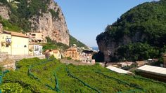 Lemon farming in Amalfi.