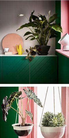 Zimmerpflanzen Machen Ein Zuhause Friedlicher Und Lebendiger. Außerdem  Tragen Sie Zur Farblichen Gestaltung Deines Wohnraums Bei. Mit Unseren Ideen  Kommst ...