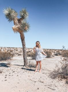 Joshua Tree x Willow and Clay