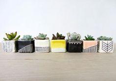 Petites plantes grasses dans des jolis pots.