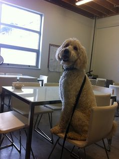 Office Dog @Pinterest: Harper, public relations.